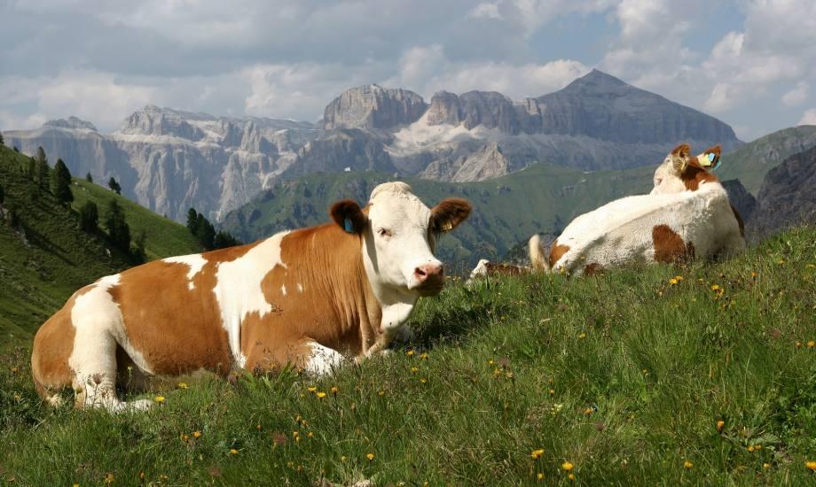 Pastures of the Val di Fassa